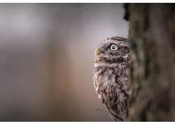 动物,猫头鹰585052