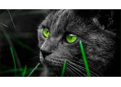 动物,猫的,哺乳动物,猫452160