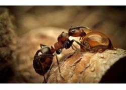 昆虫,动物,性质,蚂蚁190707