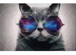 猫,墨镜,数字艺术,动物118181图片