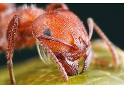 昆虫,蚂蚁,动物29980