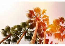 假期,德国,性质,动物,长时间曝光,西班牙,大加那利岛,尼康,海滩,图片
