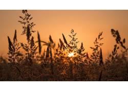 阳光,植物,壁纸,景深137388图片