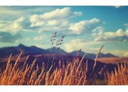 领域,草,天空,植物,云456702图片