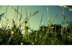 领域,草,植物,宏8983图片