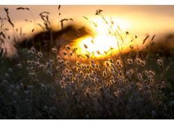 阳光,草,花卉,景深,壁纸,植物37079图片