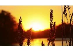 阳光,轮廓,植物,壁纸,小穗,日落26397图片
