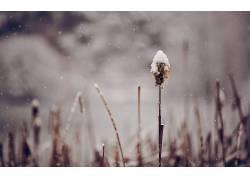 雪,壁纸,冬季,小穗,景深,植物22371图片