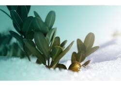 雪,数字艺术,植物,冬季187557图片