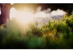 摄影,太阳光线,草,植物240547图片