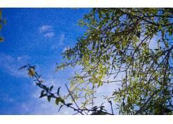 世界,树木,蓝色,天空,绿色,壁纸,科,植物324846