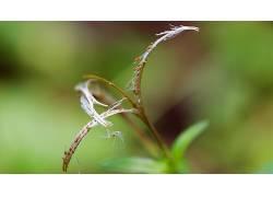 摄影,宏,树叶,植物,种子,绿色432433图片