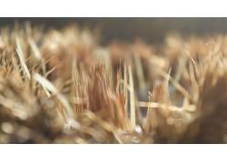 仙人掌,植物,背景虚化274496