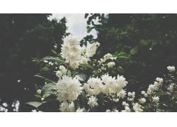 开花,花卉,植物,白花402376