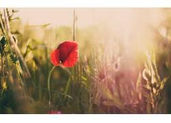 摄影,宏,花卉,植物,太阳323601