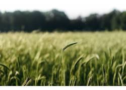 摄影,小麦,植物,树木,景深409050