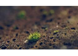 景深,宏,植物54355图片
