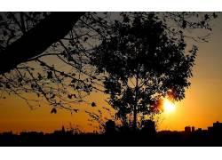 摄影,日落,树木,植物,科,树叶,城市的,市容325658