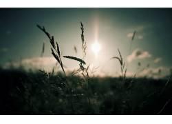 摄影,景深,壁纸,植物,太阳316188