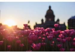 景深,日落,壁纸,花卉,太阳,植物,圣彼得堡,列宁格勒449657