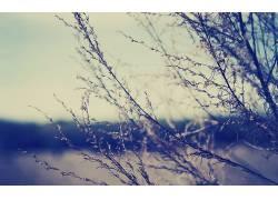 摄影,景深,壁纸,植物,科316197图片