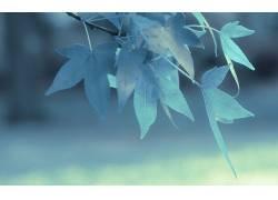 景深,树叶,壁纸,宏,植物,蓝色,科6409图片