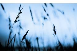 摄影,景深,壁纸,植物316191图片