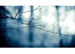 景深,树枝,水滴,单色,背景虚化,植物116038
