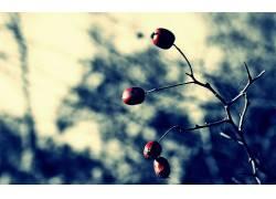 摄影,景深,植物,科,水果331017图片