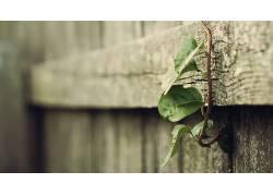 景深,植物,木,树叶54316图片