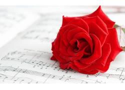 玫瑰,花卉,红,红色的花朵,音符,音乐,宏266777