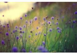 植物,花卉438345