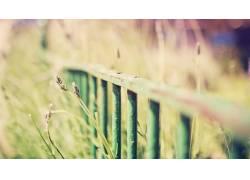 景深,篱笆,金属,植物54353