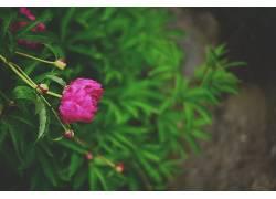 植物,花卉438385