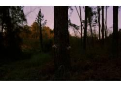 摄影,树木,手,草,植物411381图片