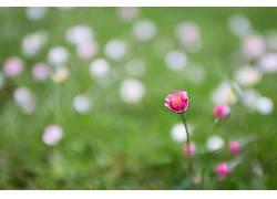 植物,花卉439759