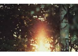 摄影,树木,树叶,科,植物,景深,太阳326328