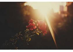 植物,花卉440283