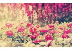 植物,花卉56302