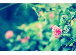 植物,花卉56351