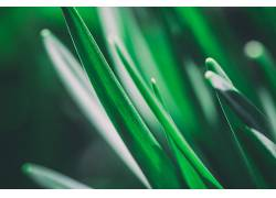 摄影,植物,壁纸,宏,景深,绿色,草262665图片