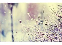 摄影,冬季,植物,科,宏,雪323374