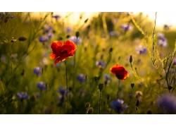 华美,花卉,植物,壁纸583434