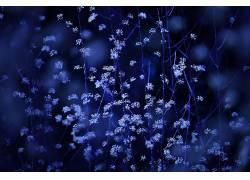 植物,花的,花卉439790