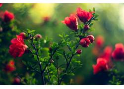 华美,花卉,植物,绿色,模糊,壁纸563663