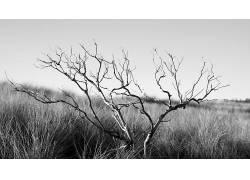 摄影,单色,植物,壁纸,景深319301