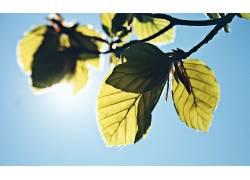 摄影,植物,壁纸,树叶,阳光,科327843图片