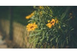 景深,花卉,篱笆,黄色的花朵139030