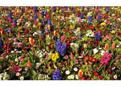 华美,花卉,植物567633