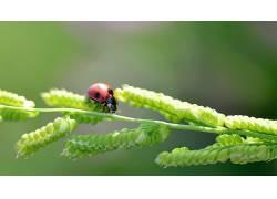 瓢虫,植物,壁纸,昆虫138216